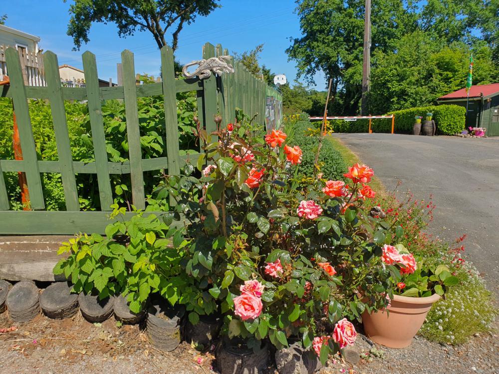 Campsite decorative flowers in full bloom